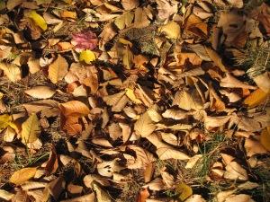 rusty leaves 003
