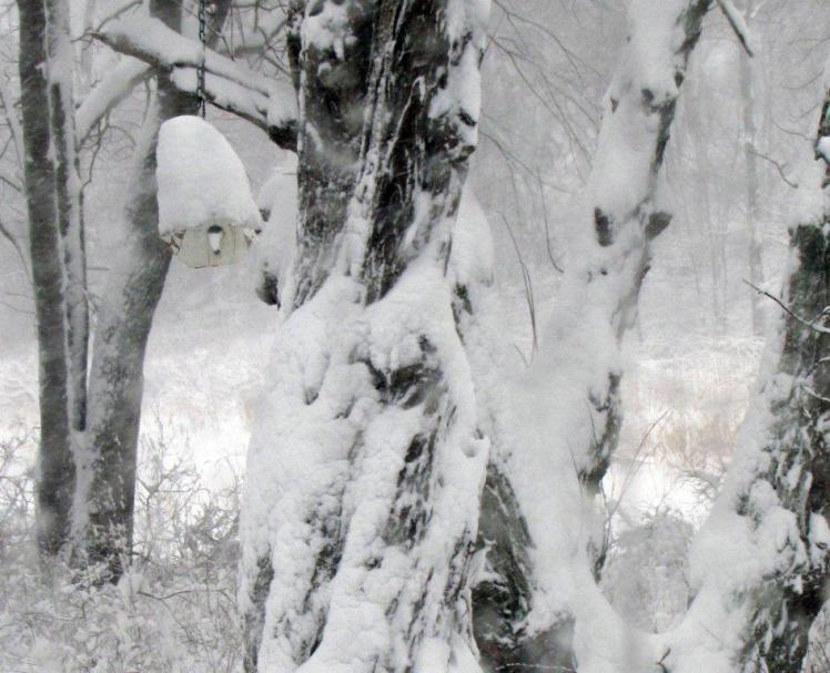 snow006e[1]