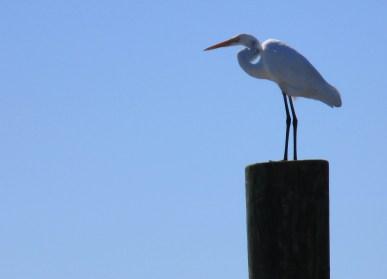 BirdsKayaking005