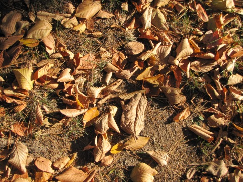 rusty leaves 001