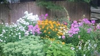 Jill's garden