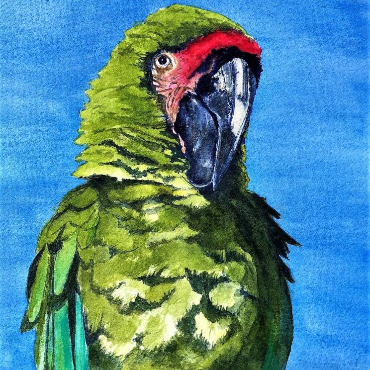 Street Parrot