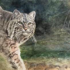 Backyard Bobcat